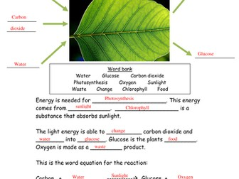 KS3 Rate of Photosynthesis