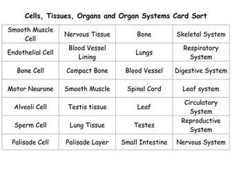 SNAB AS Biology Cellular Organisation