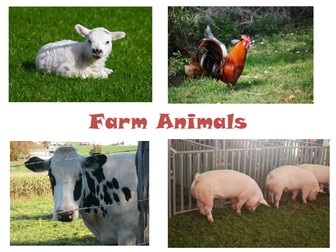 30 Photos of Farm Animals