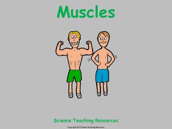 Muscles - 23 slide PowerPoint presentation and worksheet