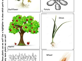 Plants We can Eat
