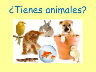 Spanish pets/animals lesson