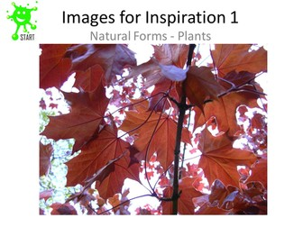 Art Resource Images for inspiration - Natural forms - Plants. Updated