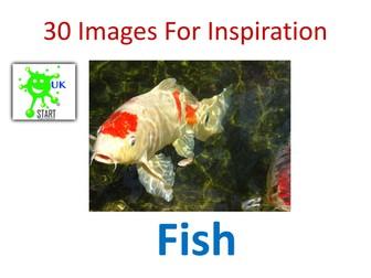 Visual Art Resource - 30 Images of Fish