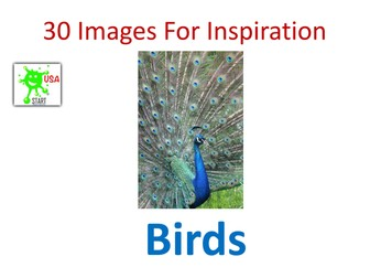 Visual Art Resource - 30 Images of Birds