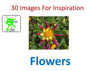 Visual art Resource - 30 Images of Flowers