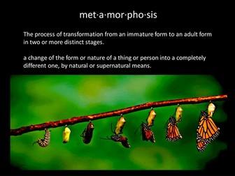 Metamorphasis Examples