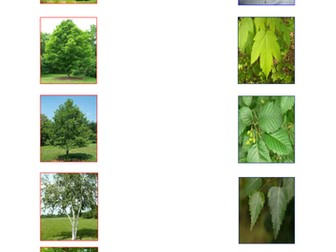 Forest School (Flora/Froma) Match leaf to tree/ Woodland Animals