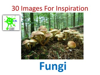 Visual Art Resource - 30 Images of Fungi for Inspiration