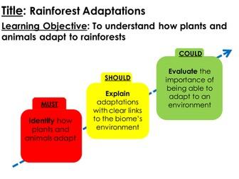 Rainforest Animal Adaptations Lesson