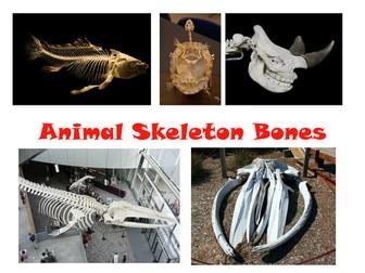 September 4 Science Pack - Skeletons, Teeth and Senses PowerPoint and Display Material