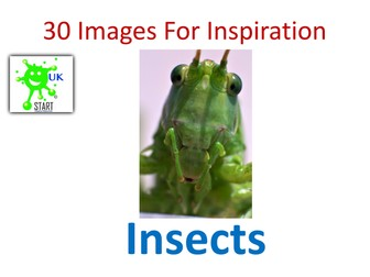 30 Images for Inspiration - Insects