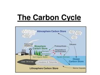GCSE - Carbon & Nitrogen Cycle
