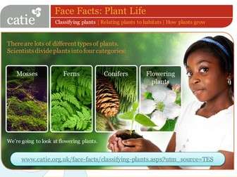 Plant Life – classifying plants web activity