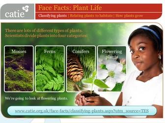 Plant Life – classifying plants web activity