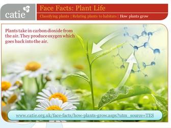 Plant Life – how plants grow  web activity