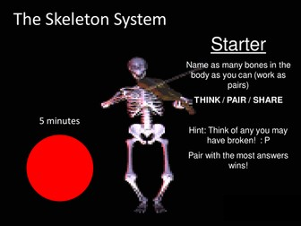 GCSE PE, Skeleton and Joints