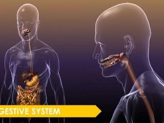 Digestive System Presentation