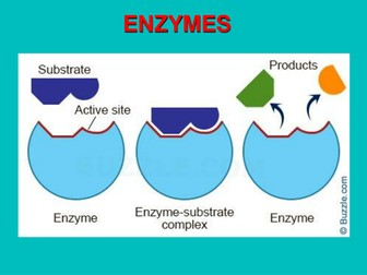 Enzymes and Enzyme technology for A Level Biology and similar courses