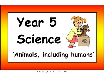 Year 5 Science Vocabulary Cards