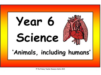 Year 6 Science Vocabulary Cards