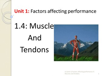 IGCSE PE 1.4 Muscles and Tendons