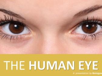 The Human Eye Presentation