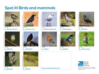 Spot It: Birds and Mammals