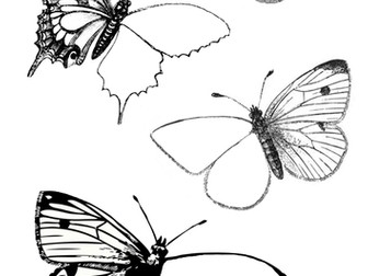 Butterfly Art - Insects