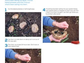 Wildlife Detective: Make a potato trap to attract mini beasts