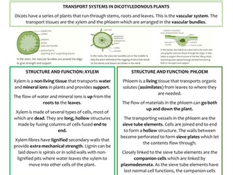 Biology AS Level OCR Revision Notes - Transport in Plants