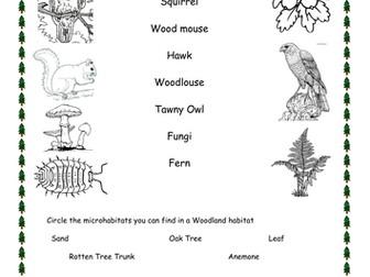 Woodland Habitat Worksheets (Differentiated)