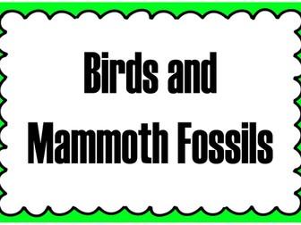 FOSSILS TEACHING RESOURCES KS1, KS2 SCIENCE HISTORY ANIMALS DINOSAURS BONES