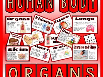 HUMAN BODY ORGANS-SCIENCE BIOLOGY KEY STAGE 2 DISPLAY BRAIN LUNGS HEART KIDNEYS LIVER ETC