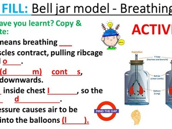 Breathing (inhaling and exhaling) and lung capacity.