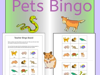 Bingo - Pets