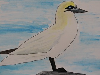What is a Gannet? Ecology and Biology: Seabirds
