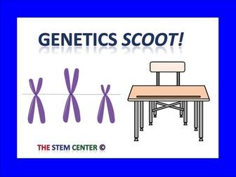 Genetics Scoot