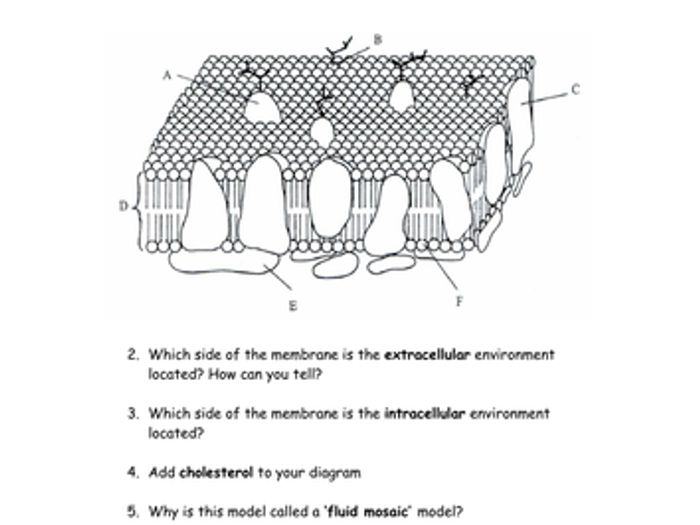 Fluid mosaic model diagram to label block and schematic diagrams cells membranes magnification microscopes by cmrcarr teaching rh tes com cell membrane fluid mosaic model diagram fluid mosaic model not labeled ccuart Image collections
