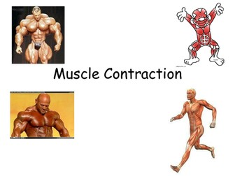 Muscles: Structure, contraction and sliding filament hypothesis