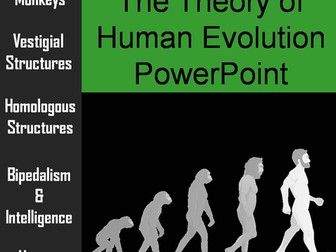 Human Evolution PowerPoint