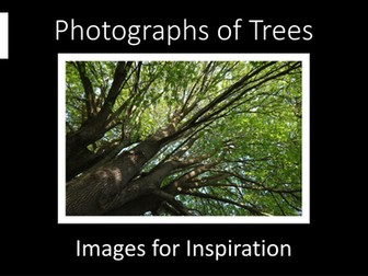 Art. Photographs of Trees. Images for Inspiration.