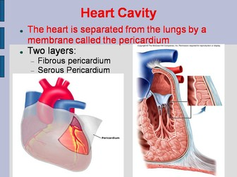 The Human Heart PowerPoint and Worksheet