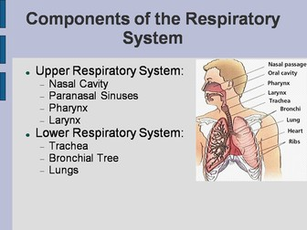The Respiratory System PowerPoint