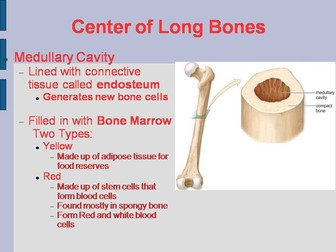 Bones PowerPoint: Structure, Composition, and Bone Growth