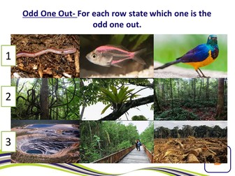 Sustainable Management of Tropical Rainforest
