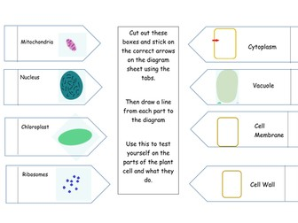 Plant Cell Foldable - All Year Groups