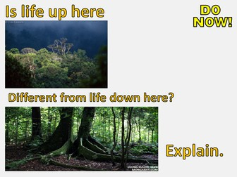 New AQA GCSE The Living World- Tropical Rainforests Lesson #2