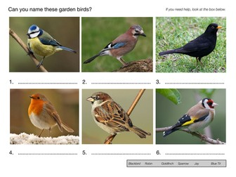Can You Name These Garden Birds?