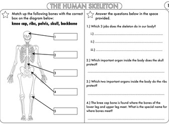 Year 3 Animals, including Humans: The Skeleton, Muscles and Movement